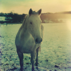 (mister sullivan) Tags: winter horse white snow cold green film polaroid sx70 artistic grain mystic tz