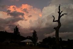 Sunset Storm 2 - Googong (Kent3ed) Tags: longexposure sunset summer storm tree art rain weather night clouds landscape afternoon natural pentax australia nsw newsouthwales canberra coldfront thunderstorm act googong k20d mtcampbell pentaxart