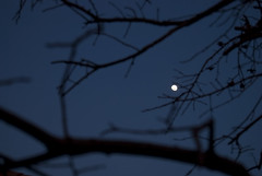 The Moon! (eugeniaman) Tags: inspiration thesunwillcomeouttomorrow eugeniamancom eugeniamanphotography