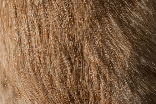 Texture: Brown and Furry