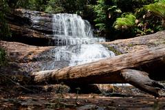 Lady Barron Falls (Liz_Rogers) Tags: waterfall tasmania cavediving mtfieldnationalpark