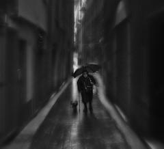 Out of time man (_Massimo_) Tags: blackandwhite bw italy dog cane umbrella italia liguria genoa genova biancoenero ombrello elderlywoman massimostrazzeri signoraanziana ghesemmu ziomamo viadiravecca spum1