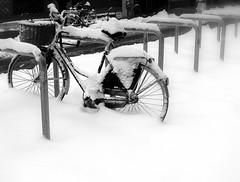 Let it snow (fede_gen88) Tags: winter blackandwhite bw italy snow milan bike bicycle blackwhite europe italia snowy milano lombardia lombardy statale universitdeglistudidimilano viafestadelperdono 15challengeswinner