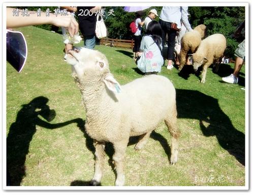 唐妮可☆吃喝玩樂過生活 拍攝的 20090802_清境青青草原43。
