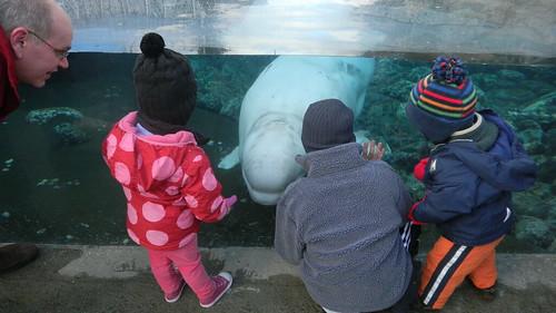 Love this whale