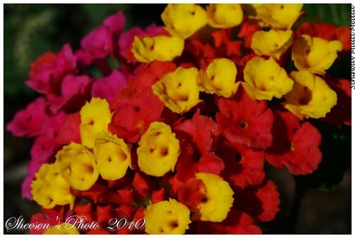 丹下桜の画像 p1_18