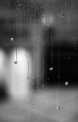 BW Rain (FedericaPC) Tags: bw rain 50mm drops nikon bn pioggia bianconero biancoenero gocce blackwhitw federicapc