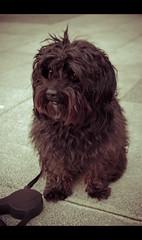 Mejor amigo (ton premier... (ocupado, busy)) Tags: dog amigo pentax perro mascota