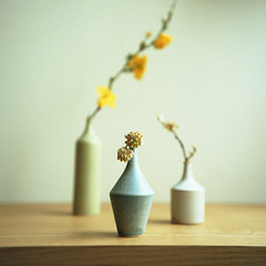 soft colors* (miki**) Tags: new blue white flower green 120 vase softcolors rolleiflex35f rolleinar2