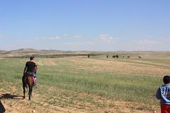 IMG_4131 (RonnyPohl) Tags: israel desert palestine event negev palstina wste beduinen beduines
