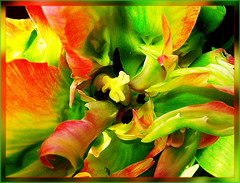 Green Waves (scorpion 13 /) Tags: friends flower colour green nature easter spring waves blossom kind tulip chapeau bellissima fantasticflower mywinners mywinner abigfave worldbest anawesomeshot impressedbeauty diamondclassphotographer flickrdiamond overtheexcellence natureselegantshots rubyphotographer gr8photos awesomeblossoms nikonaward bestofthbest