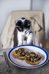 So, you thought that was your breakfast, huh? (Ambra Marras) Tags: pet mushroom kitchen animal breakfast cat kitten funny dish toast knife cheeky gato grab desayuno gatto steal colazione monella