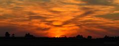 Summer sunset (ChemiQ81) Tags: polska poland polen polish polsko chemiq польша poljska polonia lengyelországban польща polanya polija lenkija ポーランド pólland pholainn פולין πολωνία pologne puola poola pollando 波兰 полша польшча outdoor summer lato landscape las forest wald les szczekociny sun setting sunset zachód słońca thebp cloud sky dusk 2015