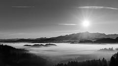fog (schneider-lein) Tags: mono monotone monochrome grau grey landscape nature fog foggy frosty earlymorning mystisch mystic mystique blackwhite schwarz weiss bergkette säntis schweiz switzerland suisse svizzera carlzeiss fe5518za sonyilce7rm2 alpha7rm2 a7rii normalobjektiv mountains sun sunrise sonnenaufgang winter wintersonne