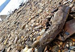 What lies beneath (Dave* Seven One) Tags: lakeallatoona ga lowtide water h20 rocks stones shoes junk trash debris forgotten sneaker