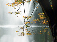 leaves before the big fountain ( Peter Grahlmann ) Tags: park tree art nature peace wow1 wow2 wow3 colorphotoaward superaplus aplusphoto saariysqualitypictures