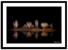 Millpond Bishop - Light Paint (Steve Sieren Photography) Tags: california trees light night dark painting pond flash steve guide bishop photoworkshop sieren scenicphotoworkshopscom stevesierencom