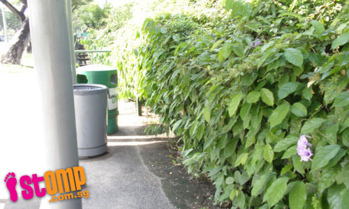 """Overgrown creepers at Penjuru bus stop gives me sense that living things lurk behind"""