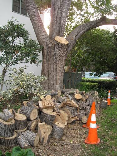 Modesto ash log pile