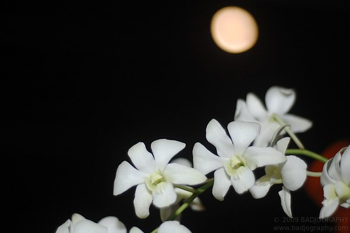 Full Moon Bokeh by badjuuuu