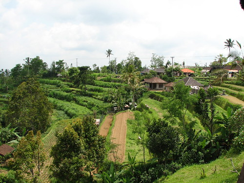 Lunch at Rice terrace, Pacung, Bali