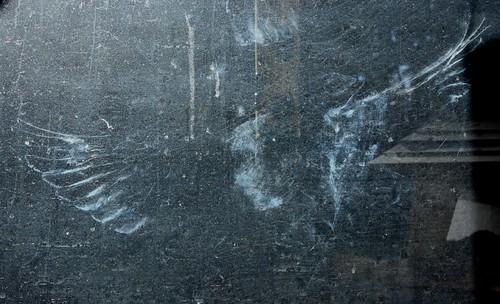 Dove imprint 1