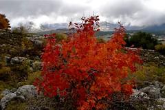 L'automne à Caussols (loutraje) Tags: automne alpesmaritimes caussols feuillage paysdegrasse