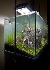 90x45x45cm - Day 7 (Stu Worrall Photography) Tags: red nature cherry aquarium ada tank counter drop bubble hc checker planted chrimp dazs braceless tennelus hairgrass optiwhite ukaps ukapsorg fiush 90x45x45cm