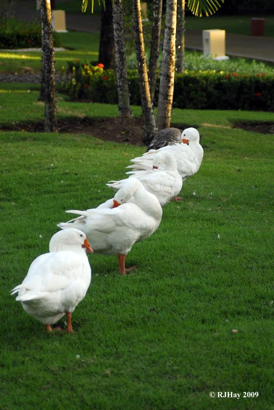 Got all my ducks in a row