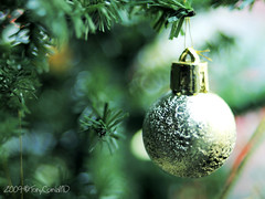 merry christmas to all!!! (DocTony Photography) Tags: christmas tree pine ball ep1 doctony 2009olympus