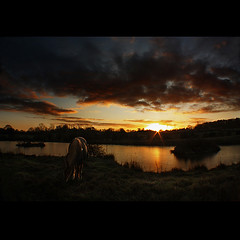 First sunset of the year (digitalpsam) Tags: sunset sky horse wonderful spectacular scenery serene heavenly justclouds colorphotoaward artofimages freedancephotographers bestcapturesaoi obramaestra sammatta