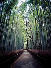 Kyoto - Bamboo path (Thomas Cristofoletti's stock photography) Tags: japan kyoto olympus e30 1260 bamboopath olympuse30