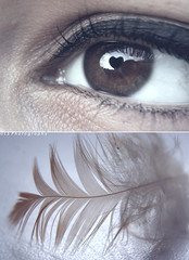 Sopravviverai. ([L] di .zuma) Tags: foto cover manuel angelo cuore occhio piuma sopravviverai