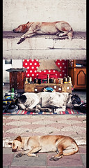 siesta en los bancos (o no) - segunda parte ([eme]) Tags: sleeping dogs turkey turkiye perros triptico turqua