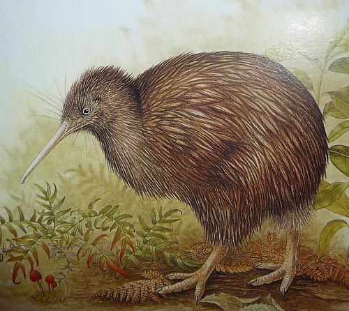 kiwiwiwiwiw