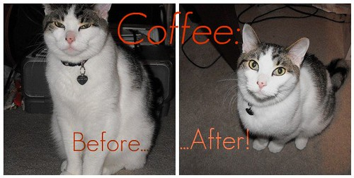 Coffee: Before and After