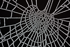 Ice on spiderweb #2 (storvandre) Tags: winter snow cold ice neve inverno freddo ghiaccio blackwhitephotos storvandre