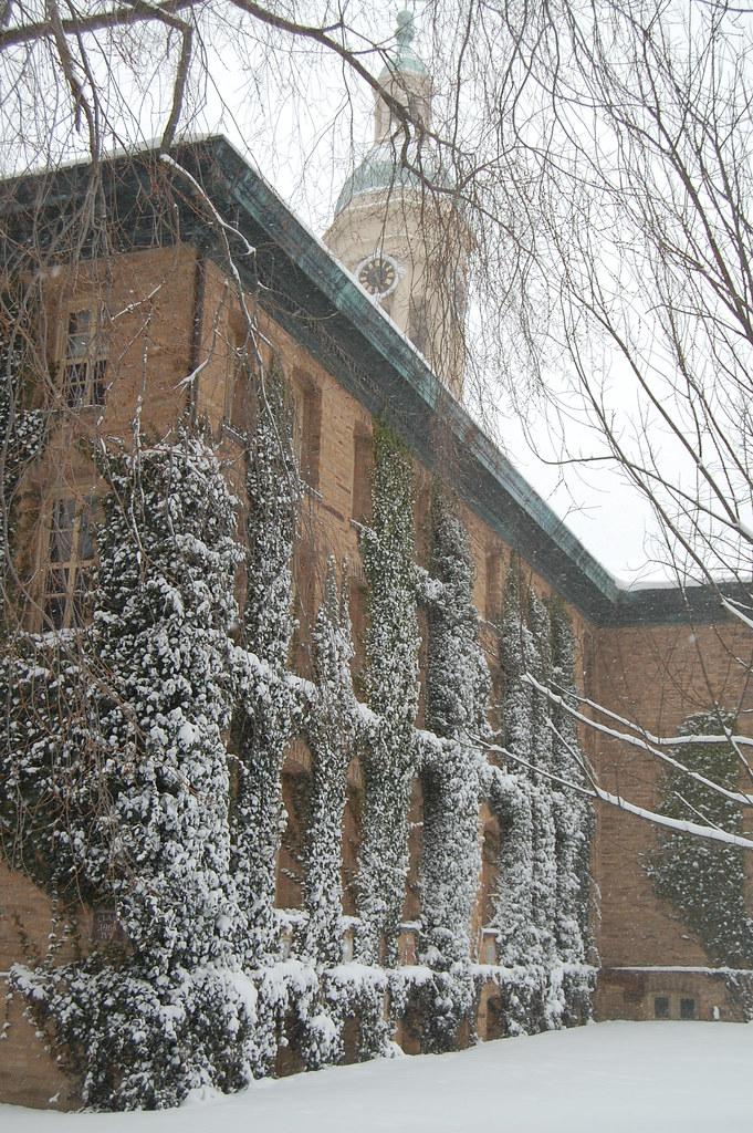 Snow on the ivy