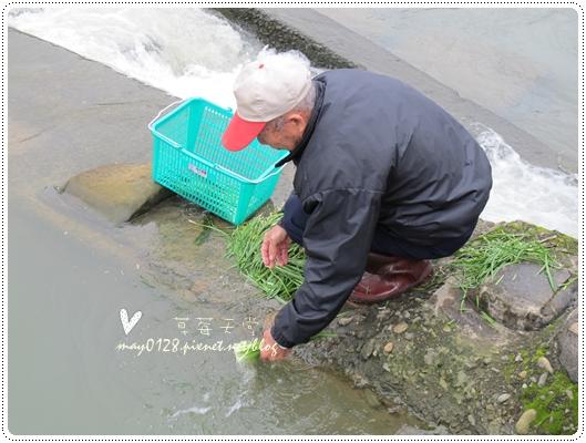 關西採草莓橘子牛欄河2010.02.20-59