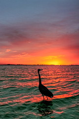 Sanibel Island Sunrise (TVGuy) Tags: ocean morning sky bird water sunrise canon island bravo florida sanibel ftmyers platinumphoto rtdgulf