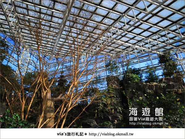 【via關西冬遊記】世界最大極的水族館~大阪海遊館8