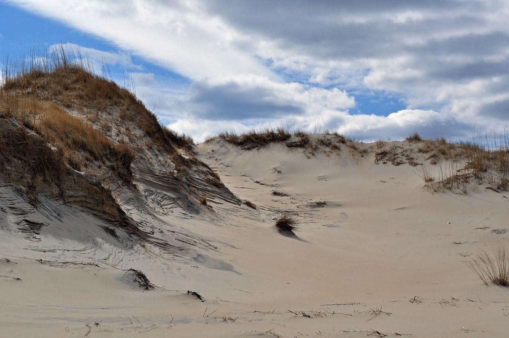 Back Bay Dune 1