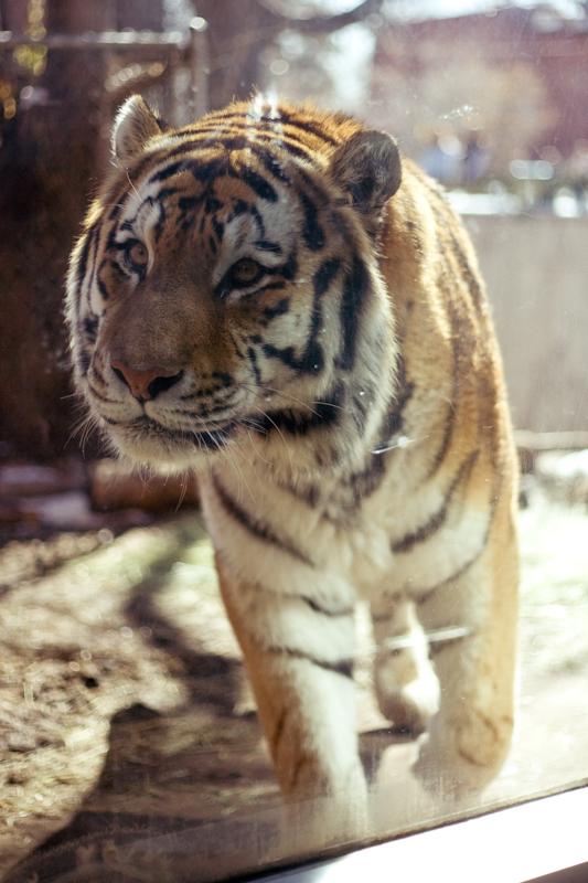 Zoo (3 of 15)