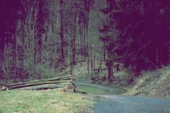 cuted (donchris!) Tags: street las forest germany way deutschland camino strasse via arbres bosque rbol alemania albero wald bume allemagne arbre baum gelnhausen germania droga weg drzewo manire drzewa ulica niemcy hailer friedwald