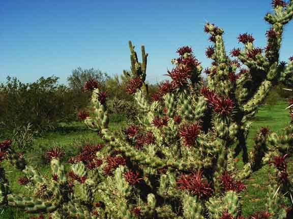 cactusbloom.jpg