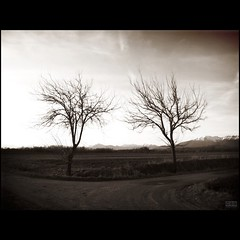 Just the two of us (Shima Hitotsu) Tags: trees winter hiver country campagna arbres neumann friuli carlobenevento