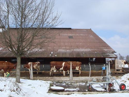 07.Mar.10 Maur_Greifensee