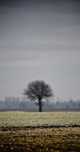 #08: Für diesen alleinstehenden Baum habe ich bewusst den Fokus nicht auf den Baum gesetzt. Das Bild wirkt so auf mich spannender.