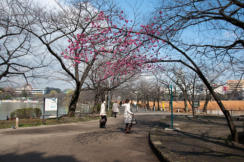 plum tree in Shinobazu pond