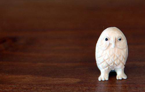 ivory owl 1